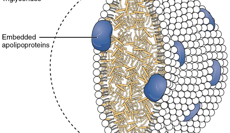 Lipoprotein Levels Functional Medicine Treatment CCFM